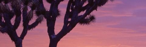 photo at Joshua Tree, California