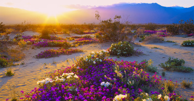 photo of Anza Borrego Desert State Park, California