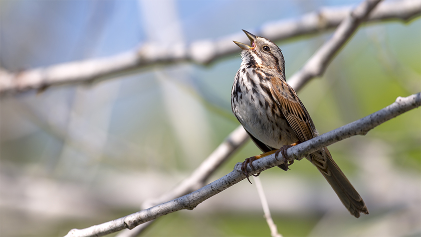 photo of sparrow