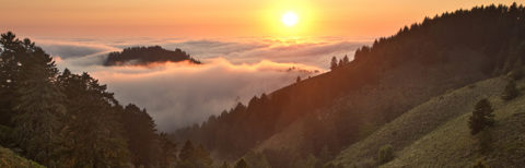 photo of fog over a California coastal forest