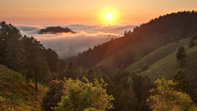 photo of fog over a California coastal forest